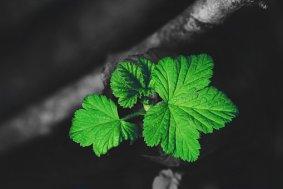 leaves-2146615__340
